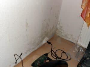 Wand verschimmelt