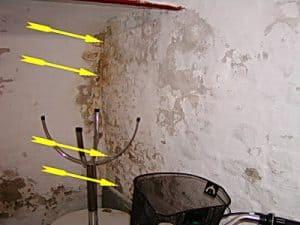 Hauskaufberatung undichter nasser Keller Hausverkauf Schimmel, Wand verschimmelt