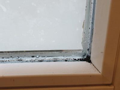 angelaufene Fensterscheiben Schimmel an Fenster, Kosten der Sanierung